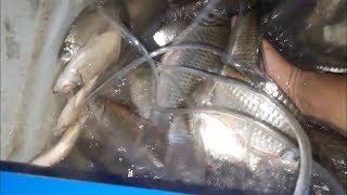 (P3) Lủi thủi trong đêm và 20kg cá lên xuồng   Săn bắt SÓC TRĂNG  