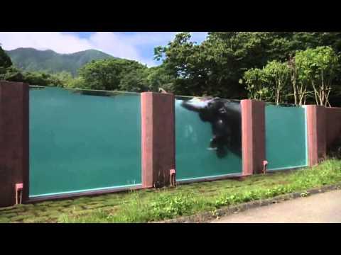 Bazen za slonove