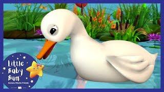 5 Little Ducks + More! | Little Baby Boogie | LBB | Baby Songs