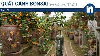 """Quất cảnh bonsai """"đại náo"""" chợ Tết 2018   VTC1"""