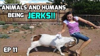Animals And Humans Being Jerks! (Compilation) 2018 - New!