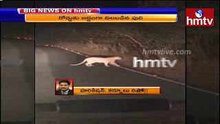 Tiger spotted on Srisailam ghat road to travellers, caught..