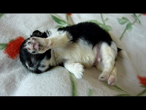 Newborn Puppy Found on the Sidewalk - Joy's Happy Ending Story