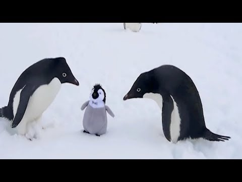 The FUNNIEST WINTER ANIMALS - You'll definitely FAIL this TRY NOT TO LAUGH challenge!