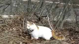 かご猫39