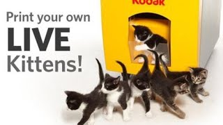 top 10 funniest cat commercials - only the best 15 funniest cats commercials