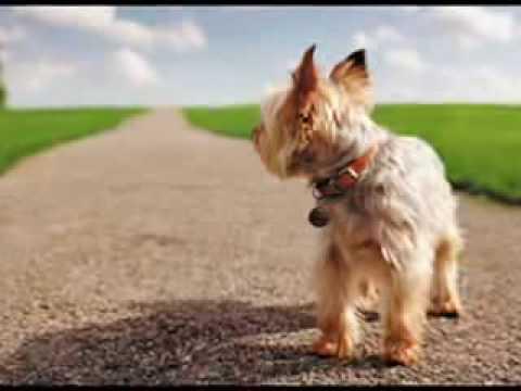 El Diario de un Perro (Refleccionen)
