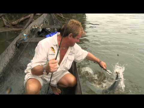 "Steve Lands a Saber-Toothed Payara - Episode 2 - The ""Fish Finder"" on the Rio Travessao"