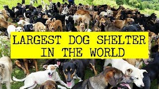WORLD'S LARGEST DOG SHELTER - Guinness World Record