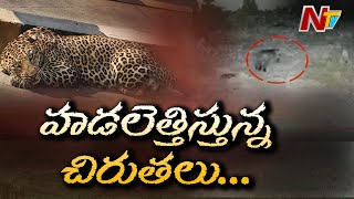 Leopard caught in CCTV footage, Hyderabad..