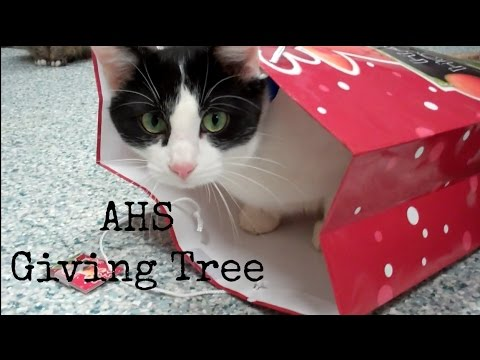 Giving Tree Video