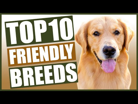 TOP 10 FRIENDLY DOG BREEDS!