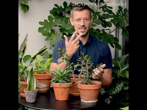 Få de beste plantetipsene fra @arcticgardener | Plantelykke – Anders Røyneberg