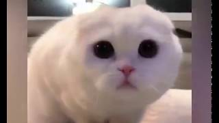 Cats are so funny you will die laughing - 2018 Best Funny cat compilation