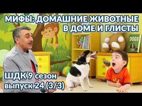 Мифы: животные в доме и глисты - Доктор Комаровский