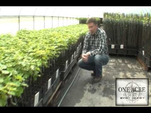 One Acre Napa Valley - Yountville AVA Episode 5e Grafting