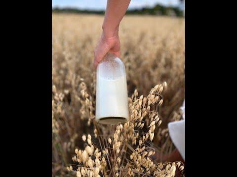 Gör din egna Havremjölk direkt i blendern!