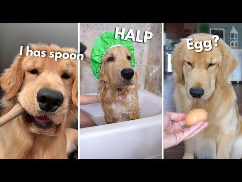 I Has Spoon, I Has Egg, I Has Baff   Compilation