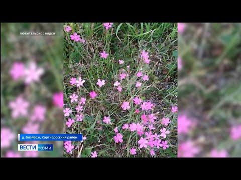 В Визябоже луга покрылись ковром полевых цветов