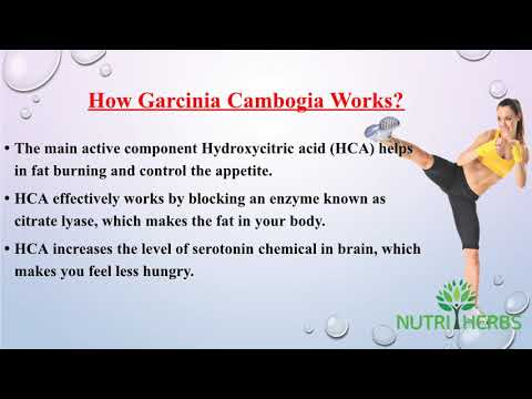 Lose Belly Fat With Pure Garcinia Cambogia