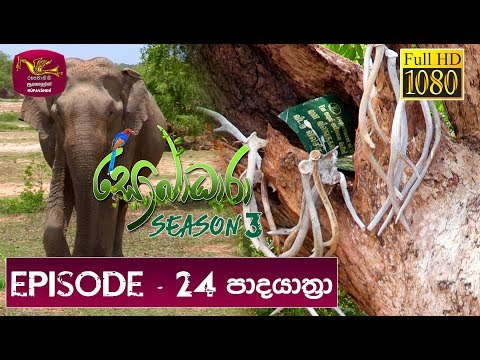 Sobadhara - Sri Lanka Wildlife Documentary | 2019-08-30 | (පාද යාත්‍රා) Padayathra