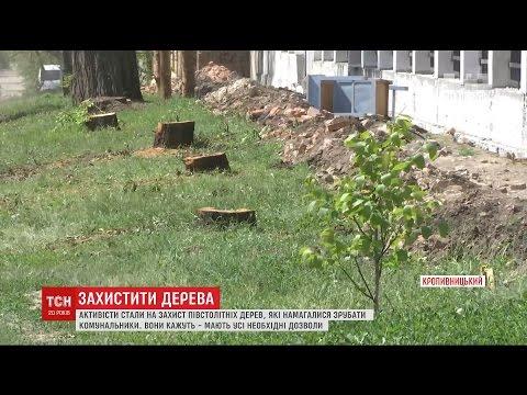 У Кропивницькому жінка прикувала себе до дерева, яке намагалися зрубати комунальники