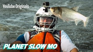 Flying Fish to the Face in Slow Motion
