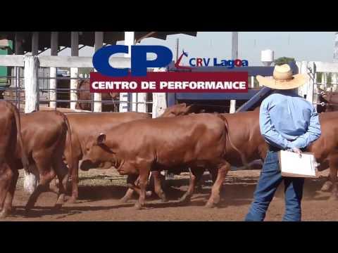 Institucional CP CRV Lagoa