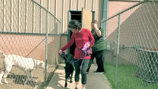 """THE BLACK DOG"" 