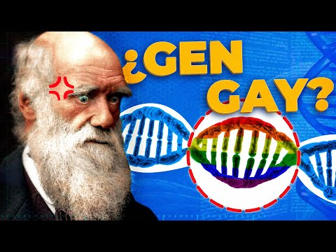 ¿Qué sentido evolutivo tiene la homosexualidad?