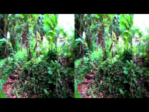 3D Video Tropical Plants - Hawaii Nature Scene - 3D Video Everyday N°49