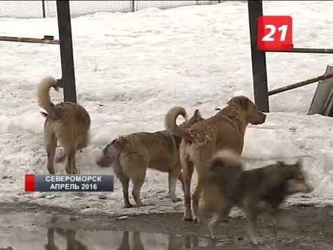 Организация могильника в североморском приюте для животных может обернуться уголовным делом
