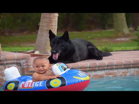 Best Protection Dog Breeds for Families