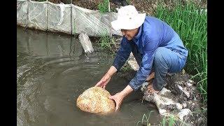 Lão nông chê 1 cây vàng, giữ hòn đá nổi để coi chơi.