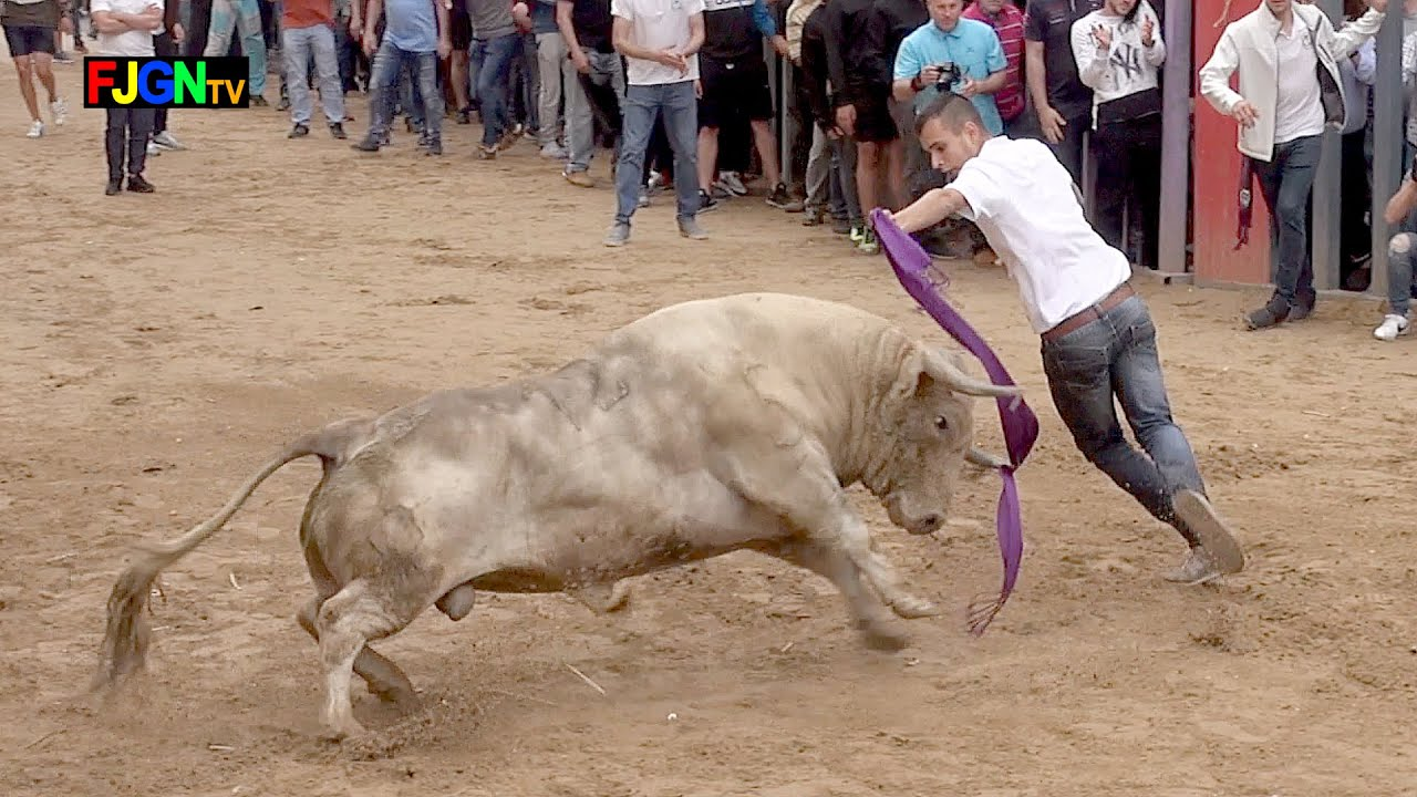 8 Toros cerriles Fiestas Sant Pasqual 2019 - Vila-real (Castellon) Bous Al Carrer