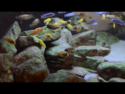600l malawi cichlids sump filtration overview for Aquarium 600l