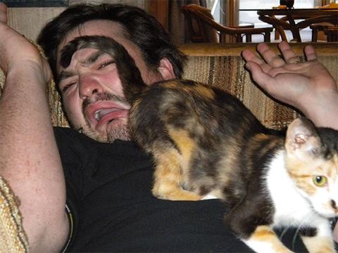 LAUGH hard & burn calories - The best CAT videos