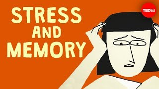 Does stress affect your memory? - Elizabeth Cox