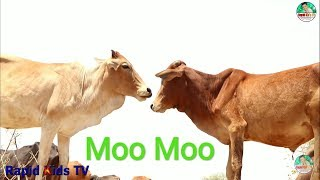 Real Cow Videos for Children   Amazing Cow Video for Kids   Great Cow Videos for Babies