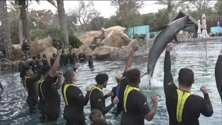 Texas Longhorns play with dolphins at Sea World in San Antonio before Alamo Bowl | KVUE
