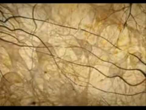 Brainwork Instructional Video: Working Memory