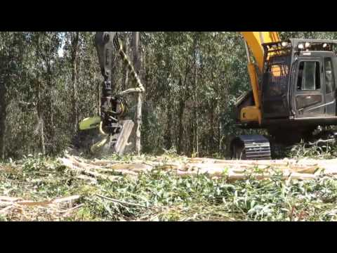 AFM 60 Euca harvester head on a Hyundai excavator debarking eucalyptus in Chile