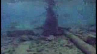 サメの海にて