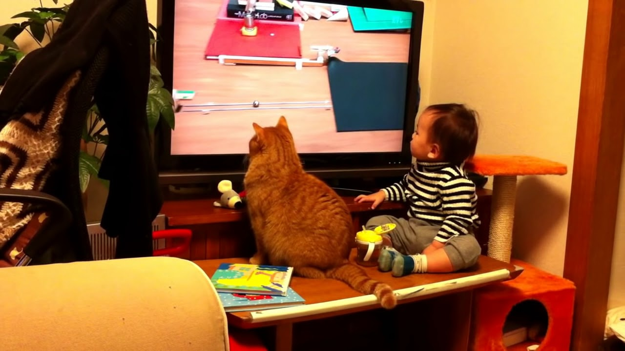 Un chat et un bébé captivés par une vidéo d'une machine de Rube Goldberg