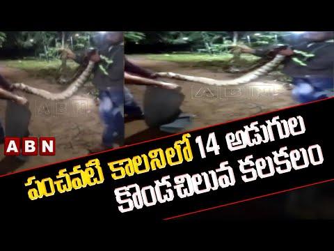 14-feet long python found at Manikonda in Hyderabad