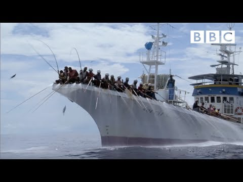 Тунец в Южном океане