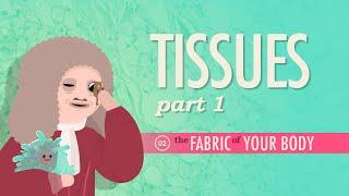 Tissues, Part 1: Crash Course A&P #2