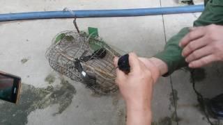 Bẫy chim chích chòe lửa sập bẫy 1 cặp lun. 0978971939