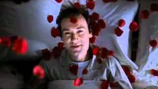 Lester's Rose Petal Dream  American Beauty Classic