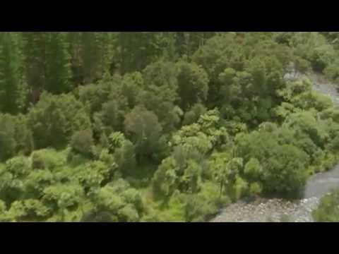 Weed management in New Zealand Planted Forests
